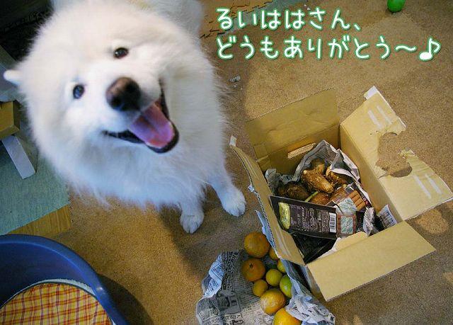 秋の味覚_c0062832_1727519.jpg