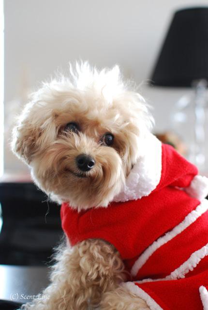 「犬連れOK!フラワーアレンジメント教室」vol.2のお知らせ_c0099133_2175184.jpg
