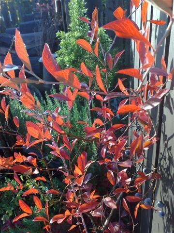 今朝の庭_b0132338_733149.jpg