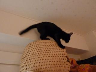 猫ちぐら猫 空しぇるろった編。_a0143140_22251315.jpg