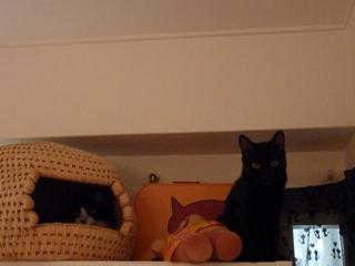 猫ちぐら猫 空しぇるろった編。_a0143140_22271382.jpg