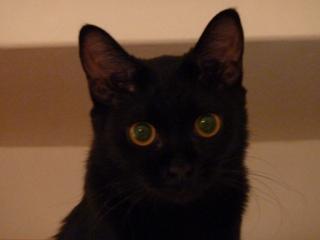猫ちぐら猫 空しぇるろった編。_a0143140_22312660.jpg