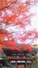 自然の美~紅葉狩り~_f0206741_19321767.jpg
