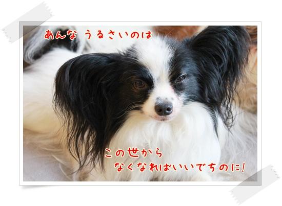 d0013149_23105244.jpg