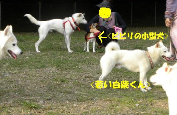 b0201756_1638250.jpg