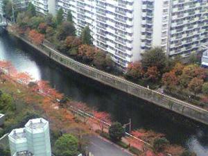 色づき始めた桜の樹_e0157359_15344535.jpg
