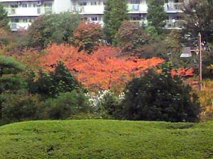 色づき始めた桜の樹_e0157359_1535102.jpg