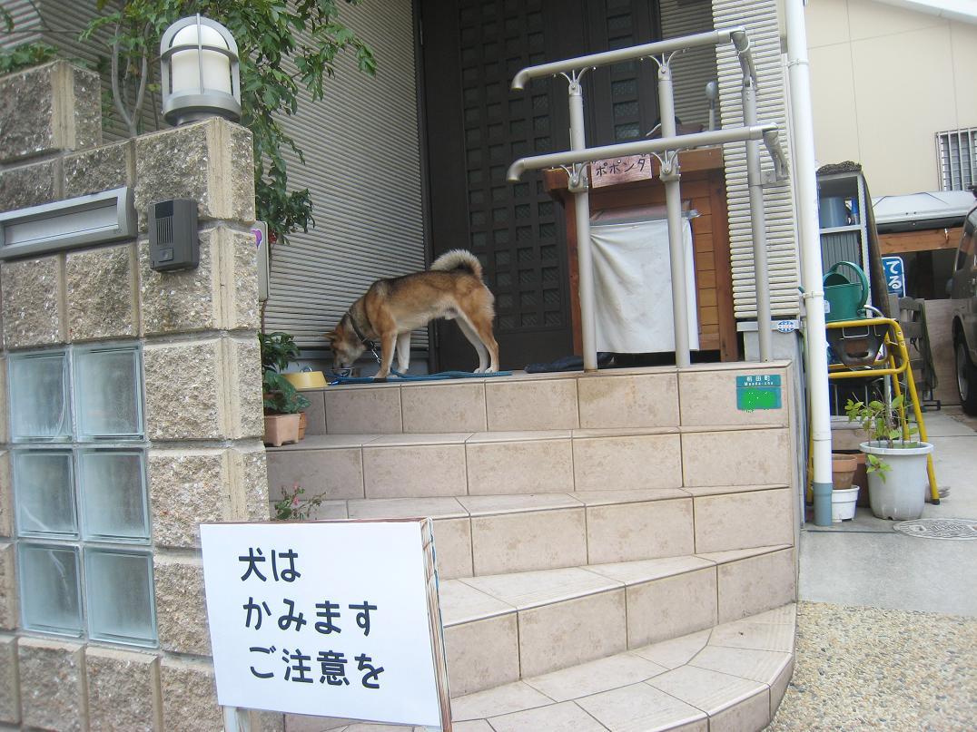 犬はかみます。_f0205367_9541682.jpg