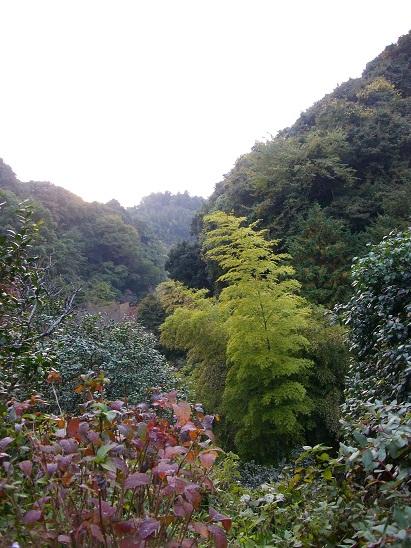 秋の鎌倉小旅行。_d0128268_13124238.jpg