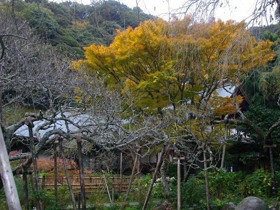秋の鎌倉小旅行。_d0128268_1313944.jpg
