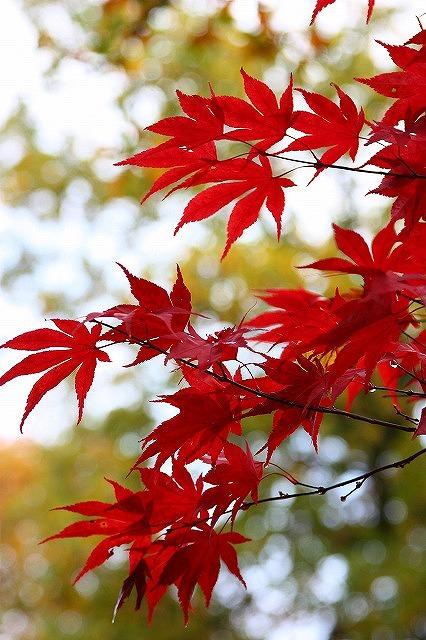 紅葉狩り☆_a0107981_1871973.jpg