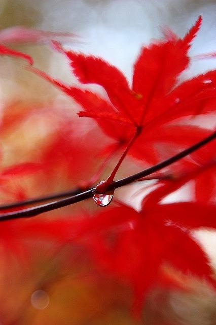 紅葉狩り☆_a0107981_1875255.jpg