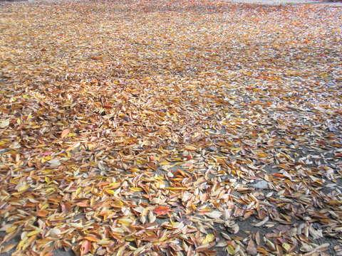 落ち葉の絨毯_b0205287_10552156.jpg