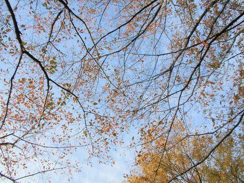 落ち葉の絨毯_b0205287_10562524.jpg