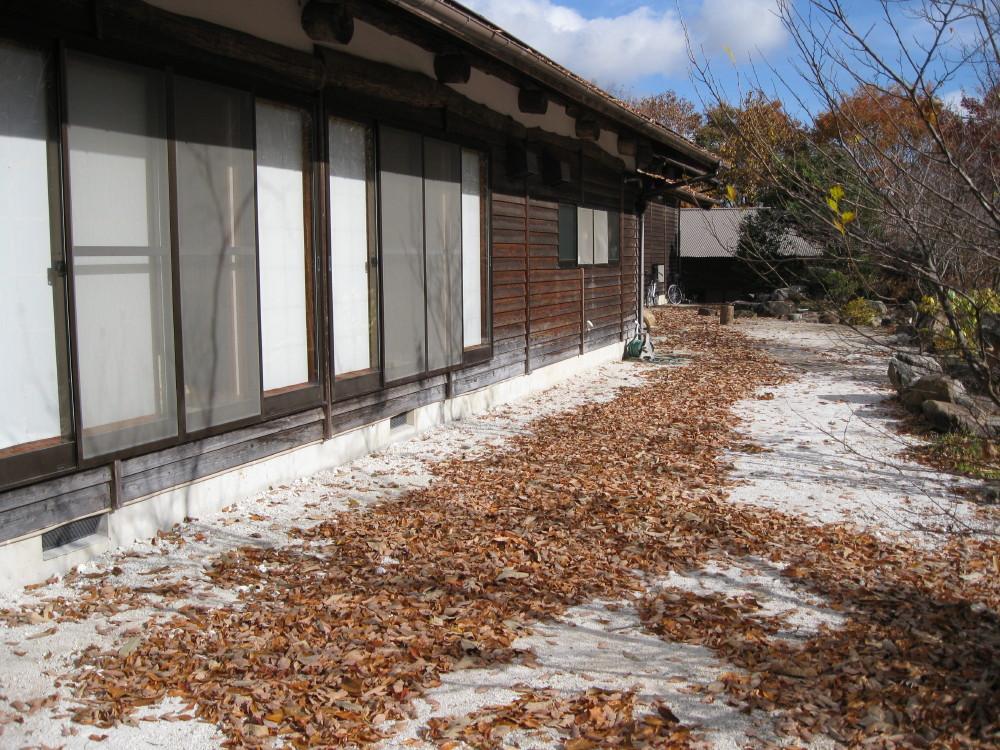 落ち葉がいっぱい_c0218213_1622078.jpg