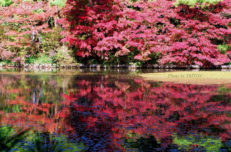 紅葉の季節… 神戸市立森林植物園・1_c0179025_1818297.jpg