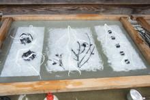 八ッ杉千年の森のイベント「和紙に炭を漉く」開催_e0061225_14111918.jpg