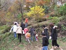 落ち葉の森のファンタジー_e0061225_9213831.jpg