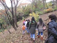 落ち葉の森のファンタジー_e0061225_9221323.jpg