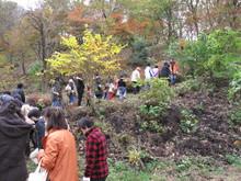 落ち葉の森のファンタジー_e0061225_922234.jpg