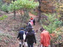 落ち葉の森のファンタジー_e0061225_9223687.jpg