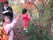 落ち葉の森のファンタジー_e0061225_9224529.jpg