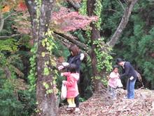 落ち葉の森のファンタジー_e0061225_9231547.jpg