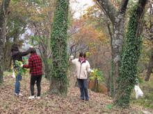 落ち葉の森のファンタジー_e0061225_923743.jpg