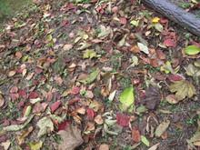 落ち葉の森のファンタジー_e0061225_9295726.jpg