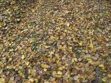 落ち葉の森のファンタジー_e0061225_9302653.jpg