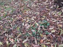 落ち葉の森のファンタジー_e0061225_9303343.jpg
