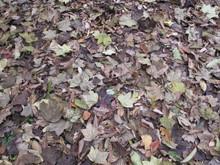 落ち葉の森のファンタジー_e0061225_930674.jpg