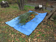 落ち葉の森のファンタジー_e0061225_955396.jpg