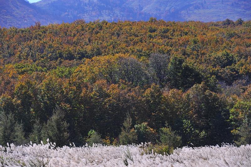 秋の光と風_f0050534_8263578.jpg