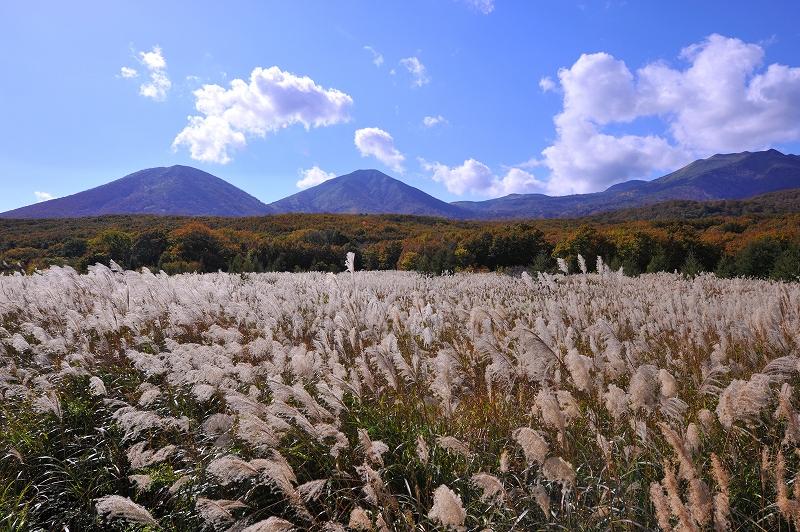 秋の光と風_f0050534_8265177.jpg