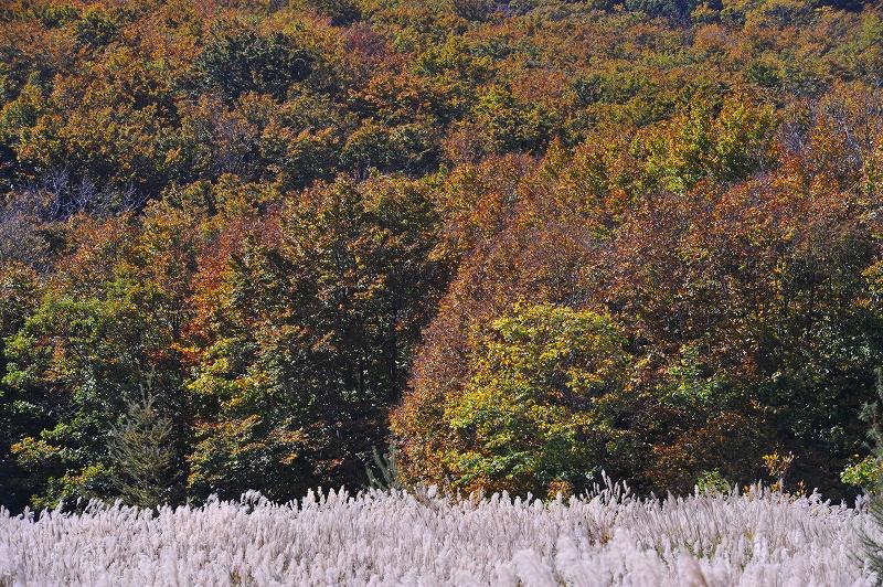 秋の光と風_f0050534_827766.jpg