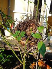 鳥の巣_f0207652_1040779.jpg
