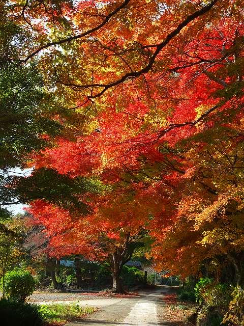 杉岳 大聖寺。_b0114756_22431260.jpg
