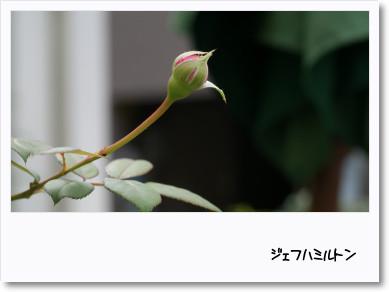f0166982_19133427.jpg