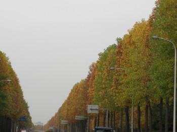 朝日も6時ぐらいに  紅葉も・・・・_b0111791_1726123.jpg