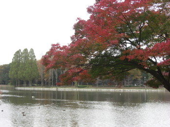 朝日も6時ぐらいに  紅葉も・・・・_b0111791_17263858.jpg