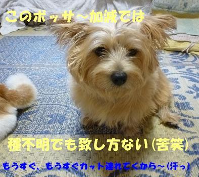 a0154801_2042027.jpg