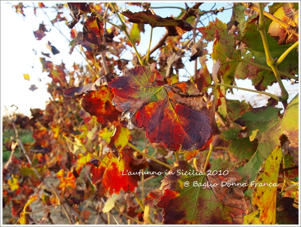 秋深まるシチリア_f0229410_21314799.jpg