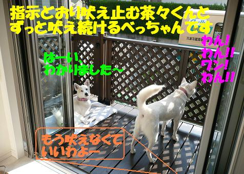 f0121712_1340317.jpg
