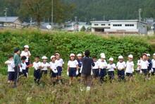 南中山小学校の子供達が大豆の収穫をしました_e0061225_913432.jpg