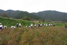南中山小学校の子供達が大豆の収穫をしました_e0061225_917755.jpg