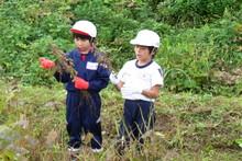 南中山小学校の子供達が大豆の収穫をしました_e0061225_918537.jpg