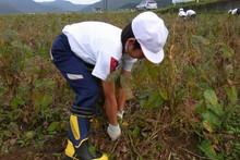 南中山小学校の子供達が大豆の収穫をしました_e0061225_9185456.jpg