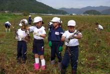 南中山小学校の子供達が大豆の収穫をしました_e0061225_919229.jpg