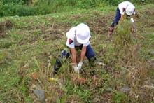 南中山小学校の子供達が大豆の収穫をしました_e0061225_919495.jpg